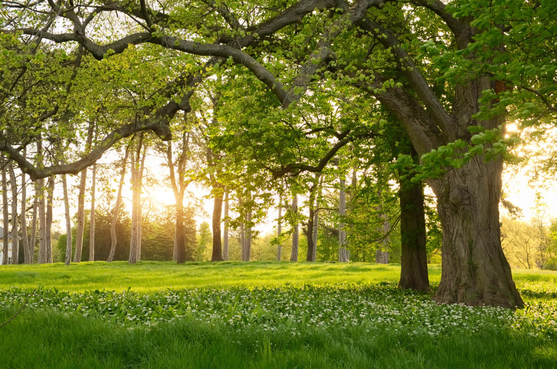 Fotolia 82116361 - Sunlight in the green forest springtime © Creaturart